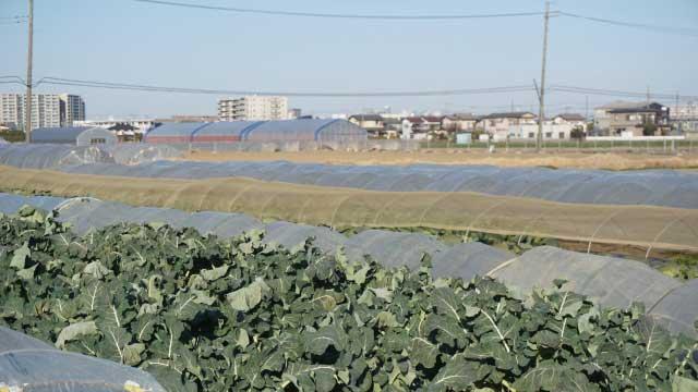 農地を評価するさいのリスクとは?